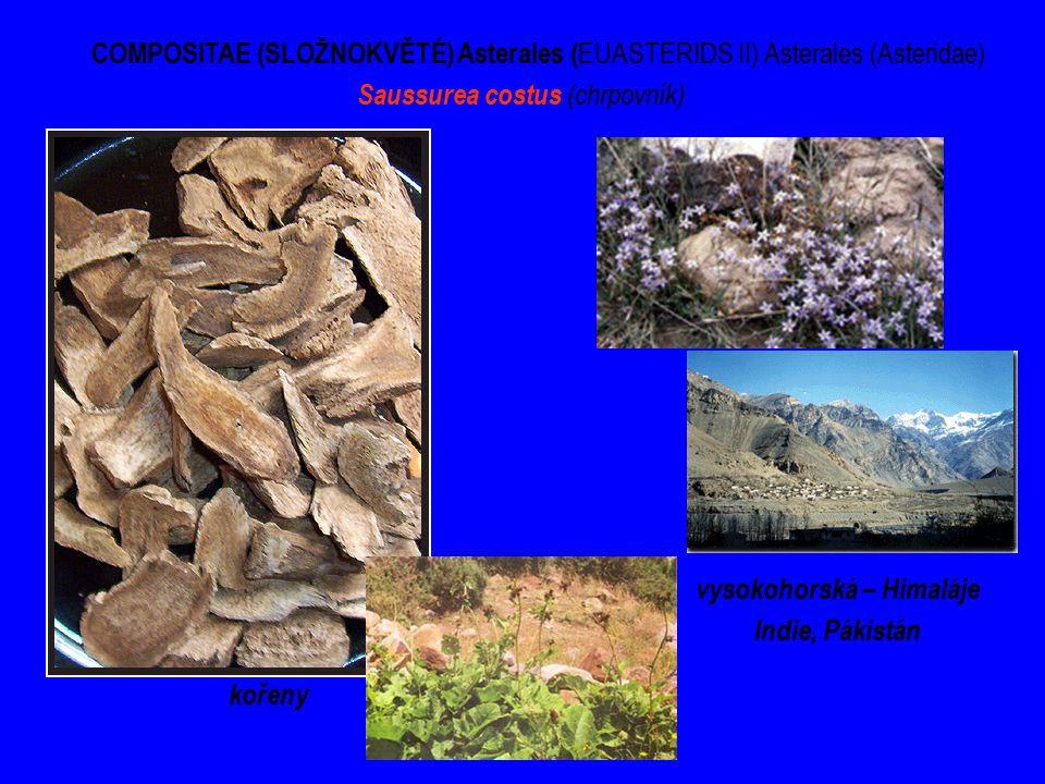 COMPOSITAE (SLOŽNOKVĚTÉ) Asterales ( EUASTERIDS II) Asterales (Asteridae) Saussurea costus (chrpovník) kořeny vysokohorská – Himaláje Indie, Pákistán