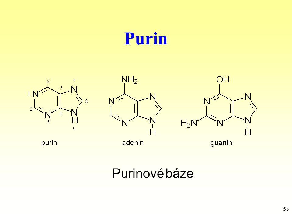 53 Purin Purinové báze