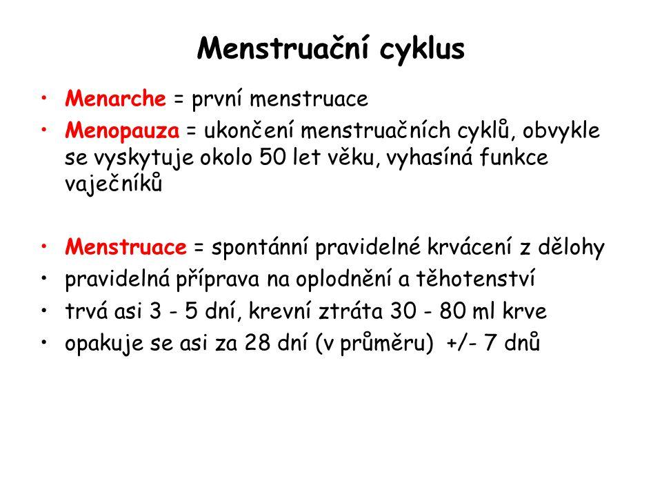 Menstruační cyklus Menarche = první menstruace Menopauza = ukončení menstruačních cyklů, obvykle se vyskytuje okolo 50 let věku, vyhasíná funkce vaječ