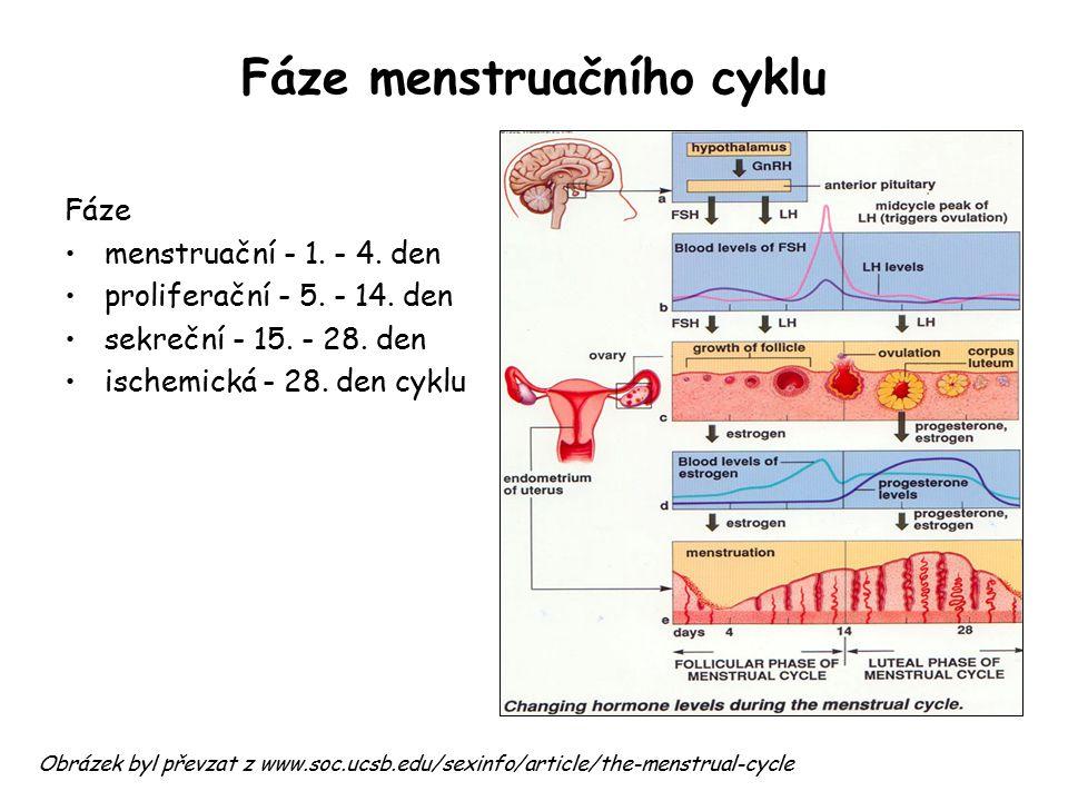 Fáze menstruačního cyklu Fáze menstruační - 1. - 4. den proliferační - 5. - 14. den sekreční - 15. - 28. den ischemická - 28. den cyklu Obrázek byl př