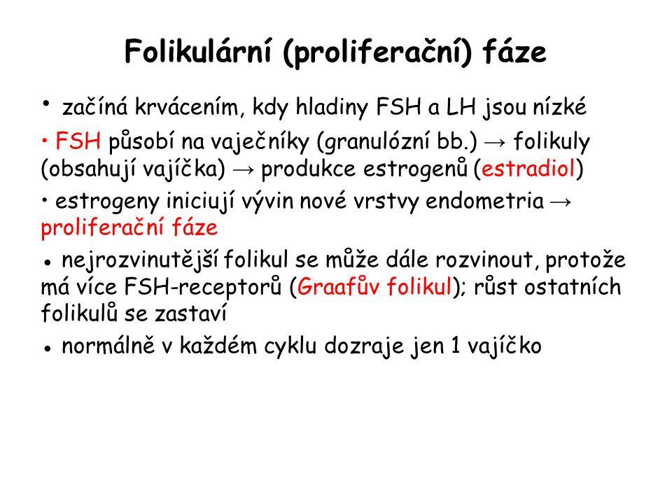 Folikulární (proliferační) fáze začíná krvácením, kdy hladiny FSH a LH jsou nízké FSH působí na vaječníky (granulózní bb.) → folikuly (obsahují vajíčk