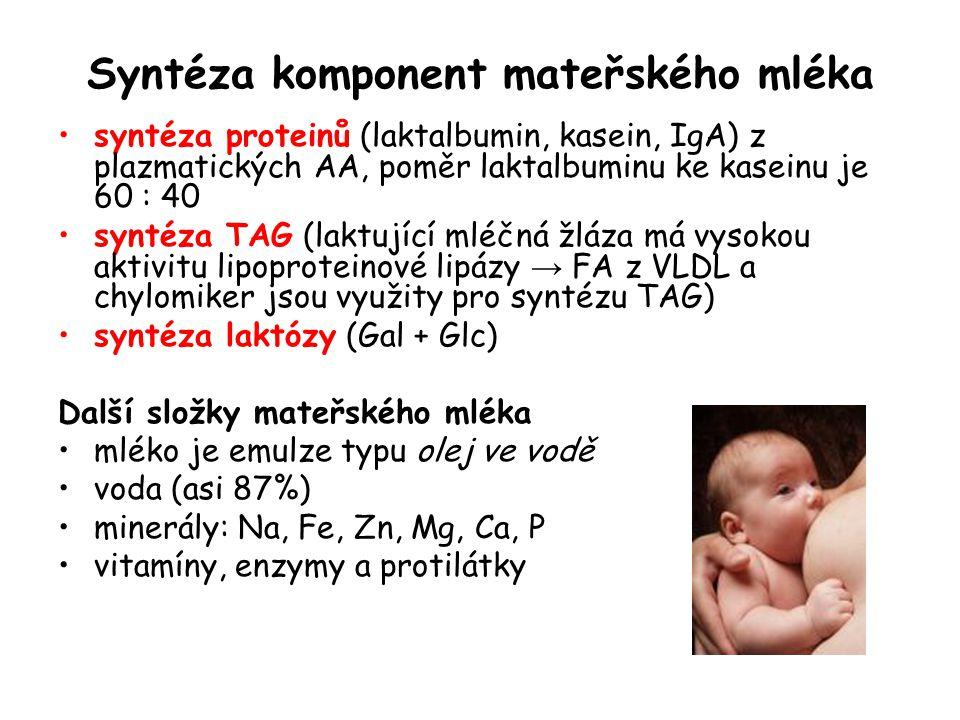 Syntéza komponent mateřského mléka syntéza proteinů (laktalbumin, kasein, IgA) z plazmatických AA, poměr laktalbuminu ke kaseinu je 60 : 40 syntéza TA
