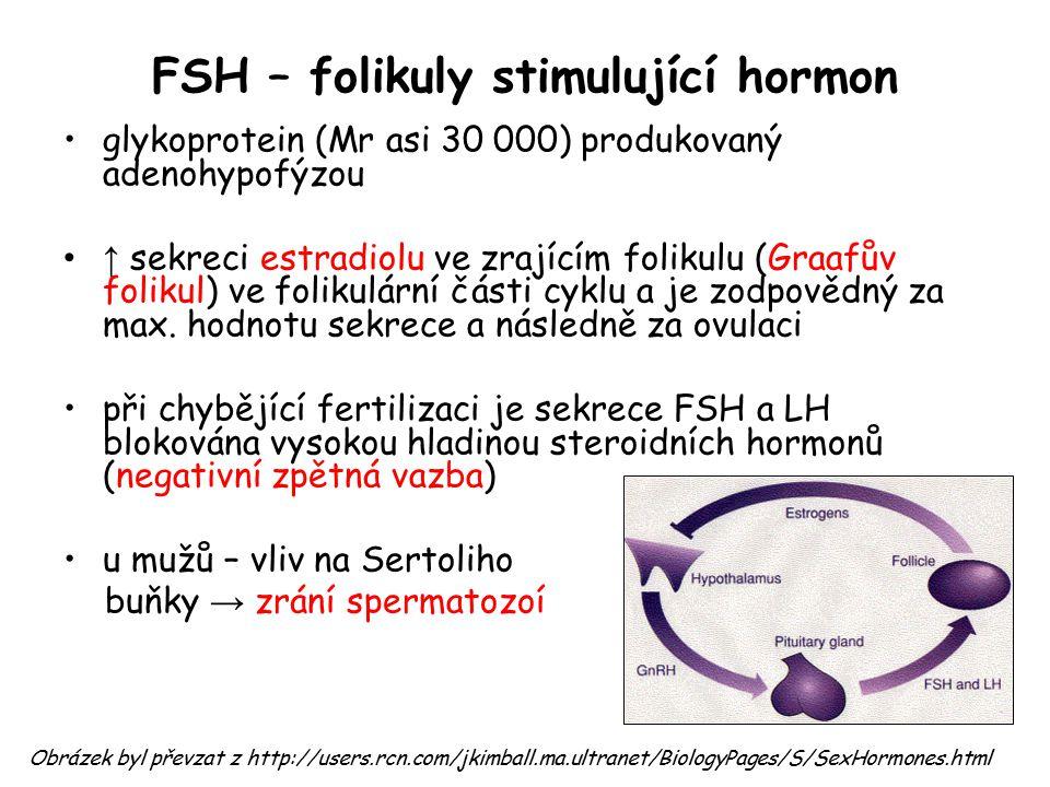 FSH – folikuly stimulující hormon glykoprotein (Mr asi 30 000) produkovaný adenohypofýzou ↑ sekreci estradiolu ve zrajícím folikulu (Graafův folikul)