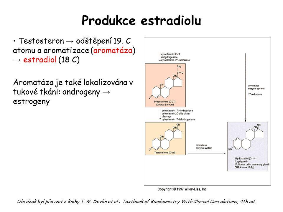 Produkce estradiolu Testosteron → odštěpení 19. C atomu a aromatizace (aromatáza) → estradiol (18 C) Aromatáza je také lokalizována v tukové tkáni: an