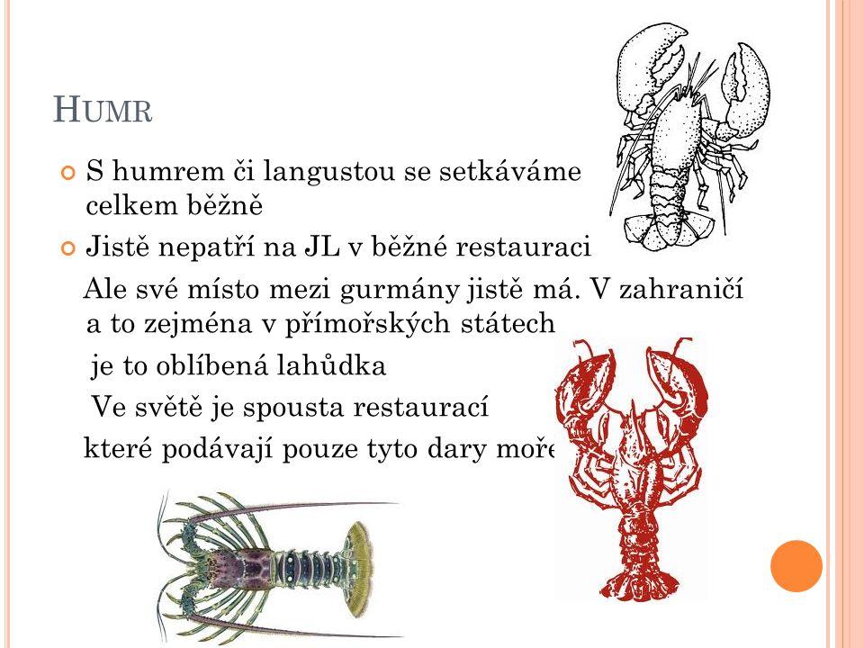 H UMR S humrem či langustou se setkáváme celkem běžně Jistě nepatří na JL v běžné restauraci Ale své místo mezi gurmány jistě má.