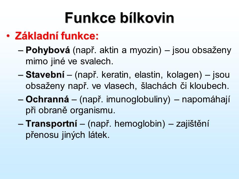 Funkce bílkovin Základní funkce:Základní funkce: –Pohybová –Pohybová (např. aktin a myozin) – jsou obsaženy mimo jiné ve svalech. –Stavební –Stavební