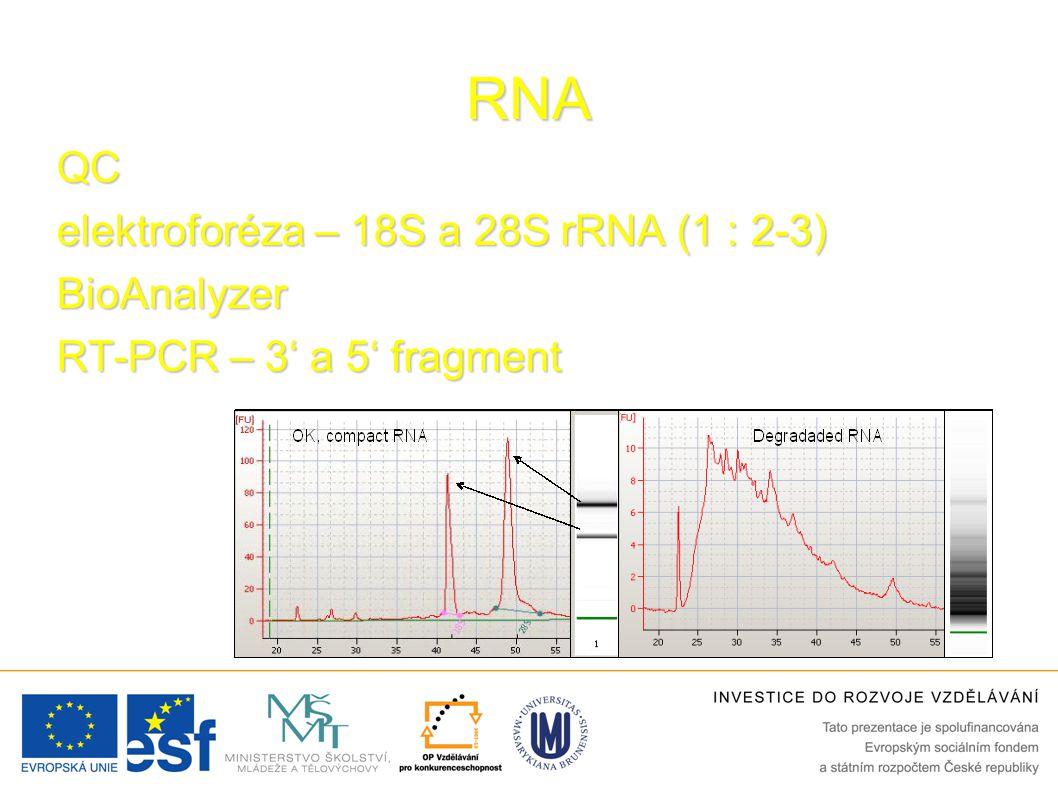 RNA QC elektroforéza – 18S a 28S rRNA (1 : 2-3) BioAnalyzer RT-PCR – 3' a 5' fragment