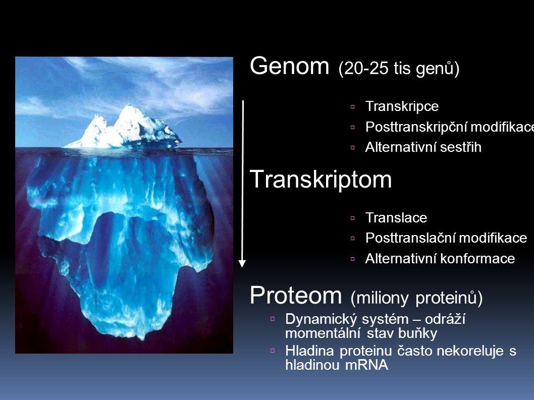 Genom (20-25 tis genů) Transkriptom Proteom (miliony proteinů)  Dynamický systém – odráží momentální stav buňky  Hladina proteinu často nekoreluje s