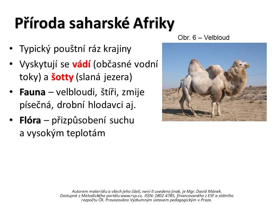 Příroda saharské Afriky Typický pouštní ráz krajiny vádí šotty Vyskytují se vádí (občasné vodní toky) a šotty (slaná jezera) Fauna Fauna – velbloudi,