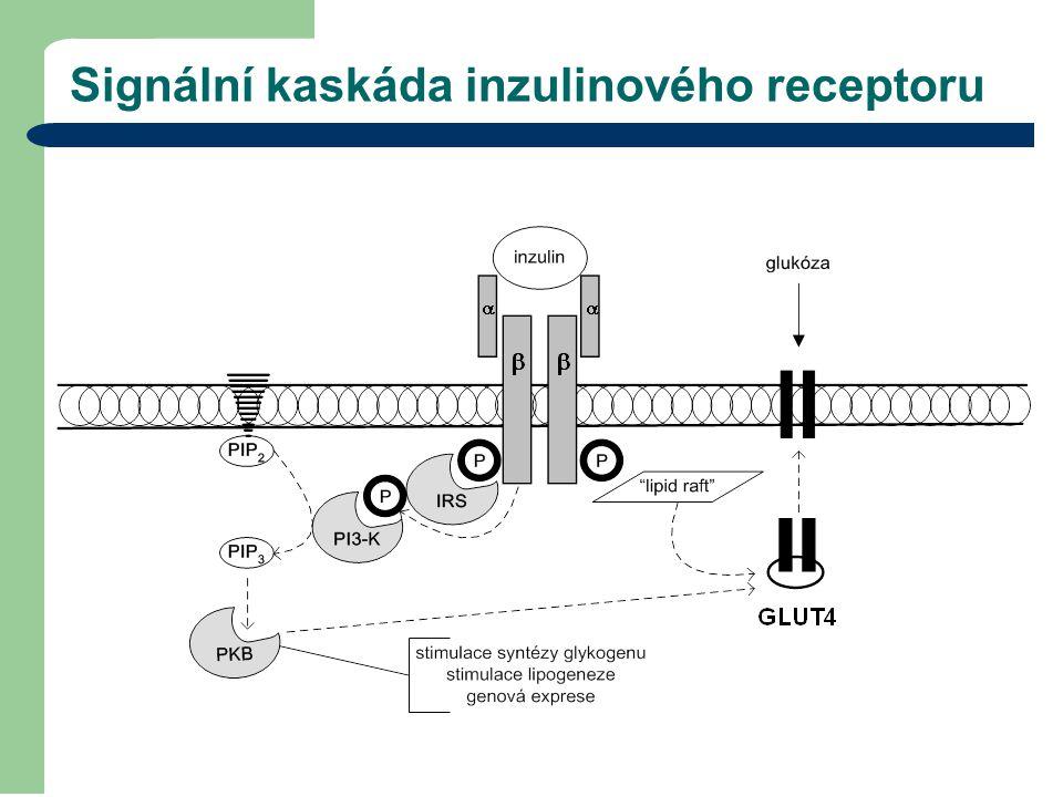 Signální kaskáda inzulinového receptoru