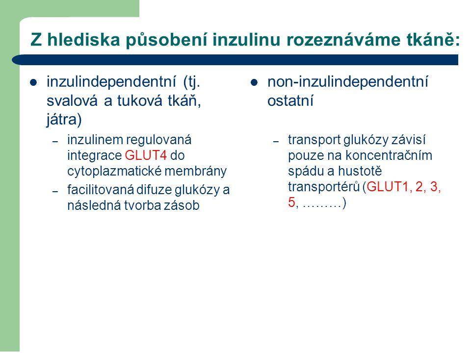 Z hlediska působení inzulinu rozeznáváme tkáně: inzulindependentní (tj. svalová a tuková tkáň, játra) – inzulinem regulovaná integrace GLUT4 do cytopl