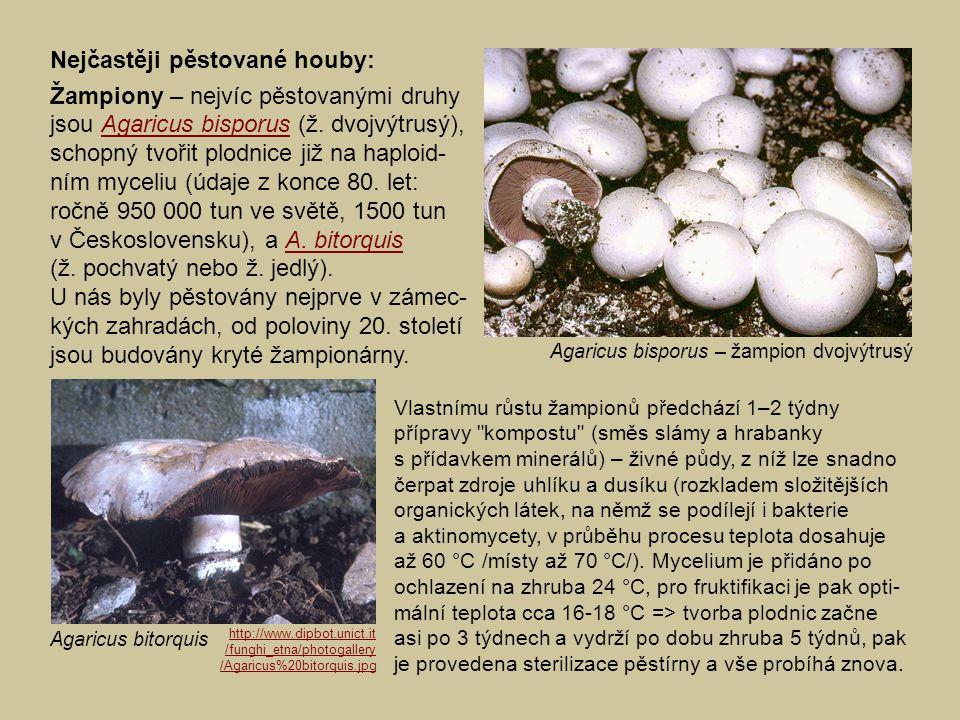 Nejčastěji pěstované houby: Žampiony – nejvíc pěstovanými druhy jsou Agaricus bisporus (ž. dvojvýtrusý), schopný tvořit plodnice již na haploid- ním m