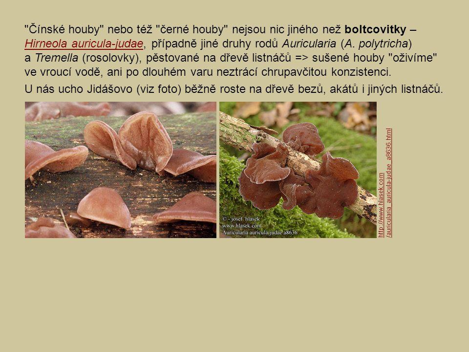 Další jedlé houby pěstované ve světě (viz též zde):zde Polnička topolová (Agrocybe cylindracea = A.