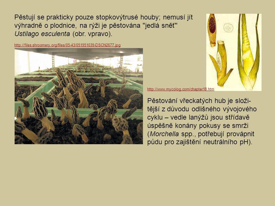 Pěstují se prakticky pouze stopkovýtrusé houby; nemusí jít výhradně o plodnice, na rýži je pěstována