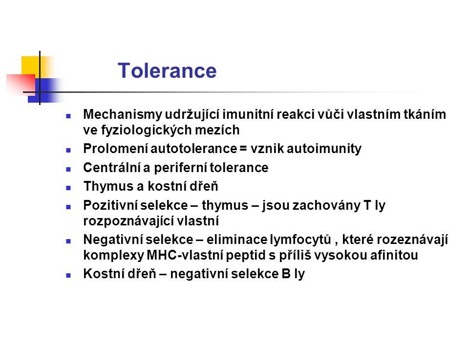Tolerance Mechanismy udržující imunitní reakci vůči vlastním tkáním ve fyziologických mezích Prolomení autotolerance = vznik autoimunity Centrální a periferní tolerance Thymus a kostní dřeň Pozitivní selekce – thymus – jsou zachovány T ly rozpoznávající vlastní Negativní selekce – eliminace lymfocytů, které rozeznávají komplexy MHC-vlastní peptid s příliš vysokou afinitou Kostní dřeň – negativní selekce B ly