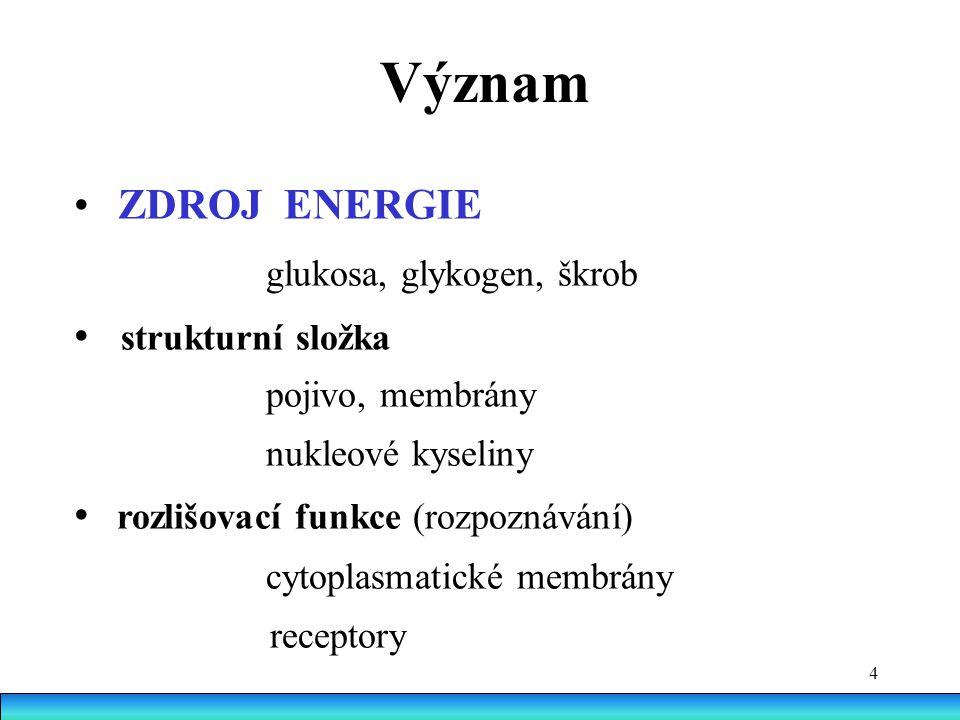 4 Význam ZDROJ ENERGIE glukosa, glykogen, škrob strukturní složka pojivo, membrány nukleové kyseliny rozlišovací funkce (rozpoznávání) cytoplasmatické membrány receptory