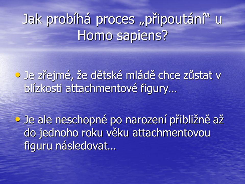 """Jak probíhá proces """"připoutání u Homo sapiens."""