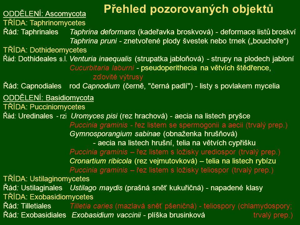 ODDĚLENÍ: Ascomycota TŘÍDA: Taphrinomycetes Řád: Taphrinales Taphrina deformans (kadeřavka broskvová) - deformace listů broskví Taphrina pruni - znetv