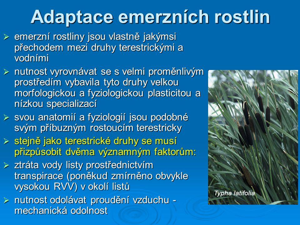 Adaptace emerzních rostlin  emerzní rostliny jsou vlastně jakýmsi přechodem mezi druhy terestrickými a vodními  nutnost vyrovnávat se s velmi proměn