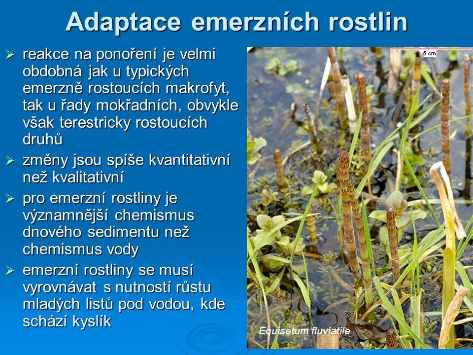 Adaptace emerzních rostlin  reakce na ponoření je velmi obdobná jak u typických emerzně rostoucích makrofyt, tak u řady mokřadních, obvykle však tere