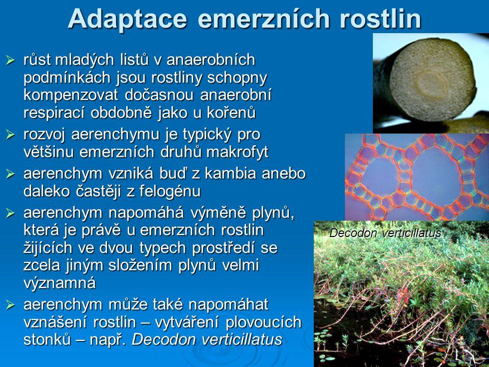 Adaptace emerzních rostlin  růst mladých listů v anaerobních podmínkách jsou rostliny schopny kompenzovat dočasnou anaerobní respirací obdobně jako u