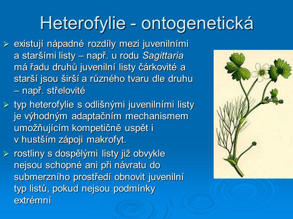  existují nápadné rozdíly mezi juvenilními a staršími listy – např. u rodu Sagittaria má řadu druhů juvenilní listy čárkovité a starší jsou širší a r