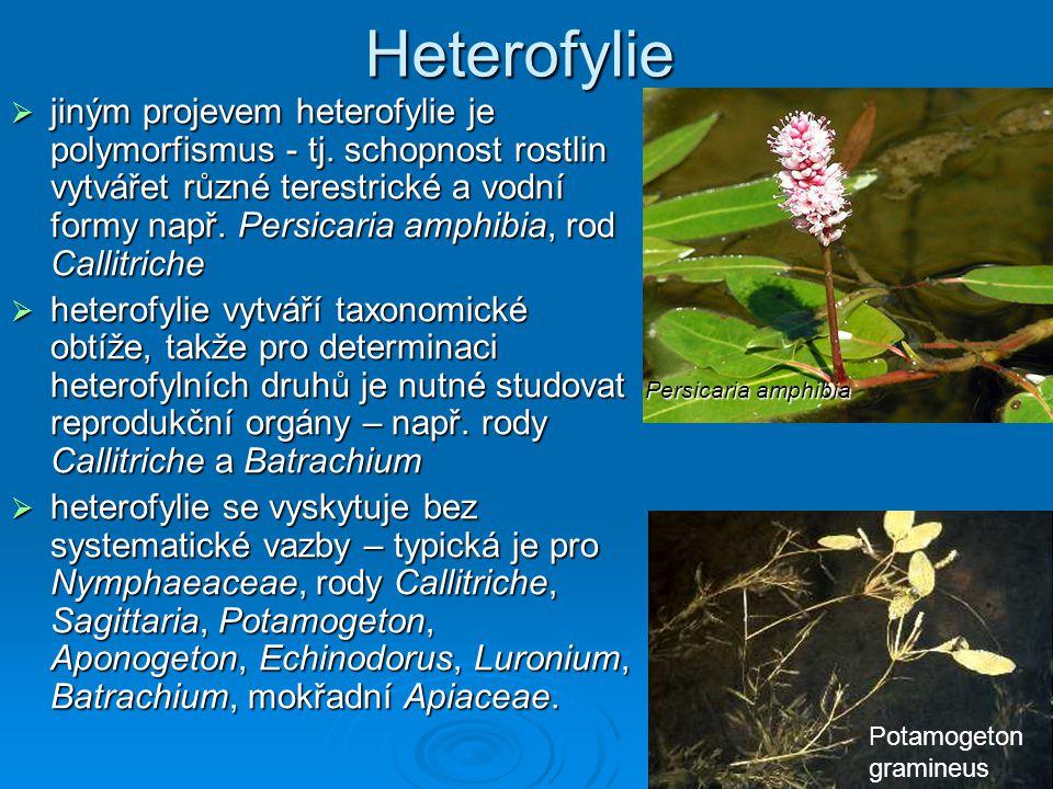  jiným projevem heterofylie je polymorfismus - tj. schopnost rostlin vytvářet různé terestrické a vodní formy např. Persicaria amphibia, rod Callitri
