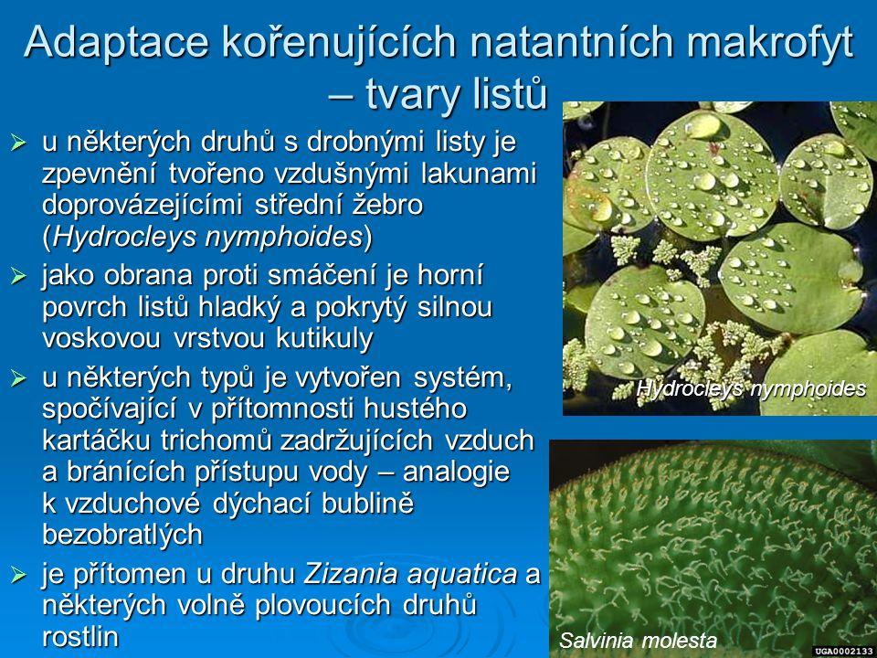 Adaptace kořenujících natantních makrofyt – tvary listů  u některých druhů s drobnými listy je zpevnění tvořeno vzdušnými lakunami doprovázejícími st