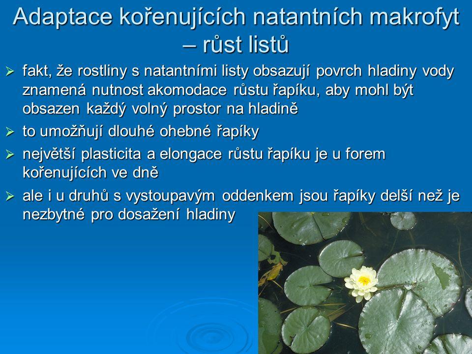 Adaptace kořenujících natantních makrofyt – růst listů  fakt, že rostliny s natantními listy obsazují povrch hladiny vody znamená nutnost akomodace r