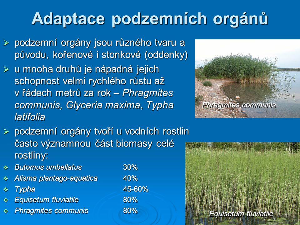 Adaptace podzemních orgánů  menší, gracilnější druhy vodních rostlin často vytvářejí jinou strategii - intenzivní růst kořenů z jednotlivých nodů v rámci svého prostrátního až vystoupavého růstu: Marsilea, Pilularia, Myriophyllum, Potamogeton  u řady druhů je naopak schopnost tvorby adventivních kořenů z nodů blokována a k jejich tvorbě dochází pouze za určitých podnětů a v normálních podmínkách tvoří pouze extenzivní kořenový systém: Najas, Egeria