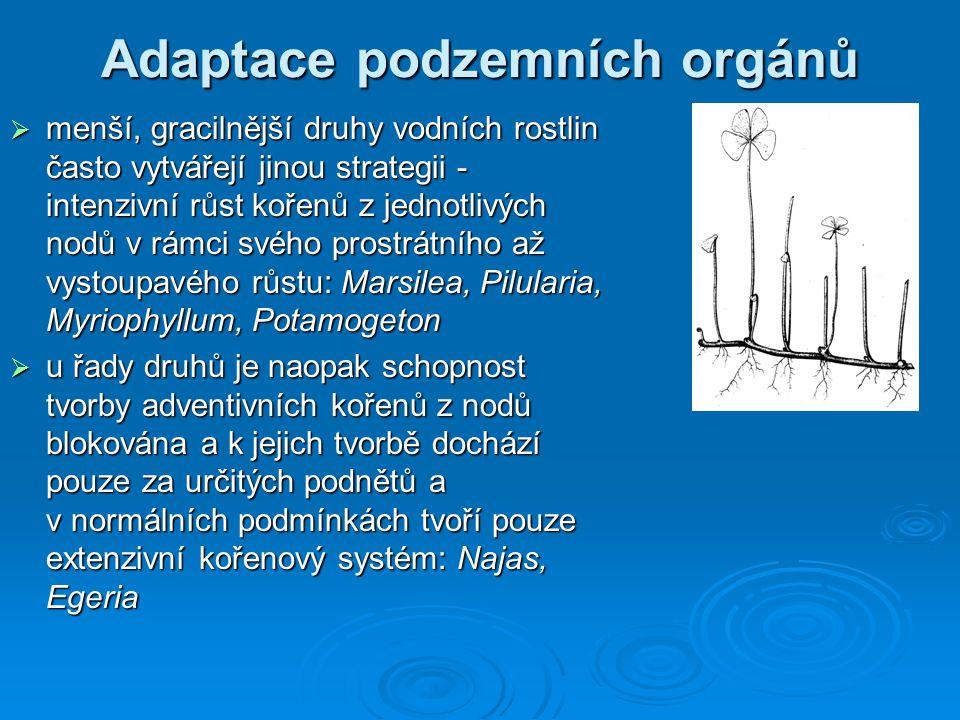 Adaptace emerzních rostlin  reakce na ponoření je velmi obdobná jak u typických emerzně rostoucích makrofyt, tak u řady mokřadních, obvykle však terestricky rostoucích druhů  změny jsou spíše kvantitativní než kvalitativní  pro emerzní rostliny je významnější chemismus dnového sedimentu než chemismus vody  emerzní rostliny se musí vyrovnávat s nutností růstu mladých listů pod vodou, kde schází kyslík Equisetum fluviatile