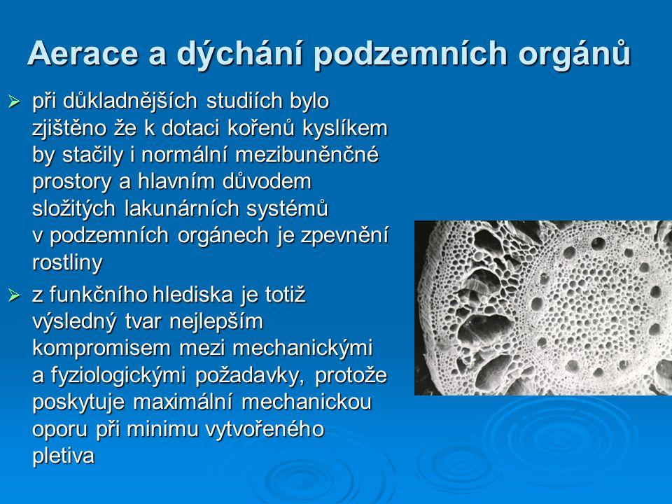 Aerace a dýchání podzemních orgánů  při důkladnějších studiích bylo zjištěno že k dotaci kořenů kyslíkem by stačily i normální mezibuněnčné prostory