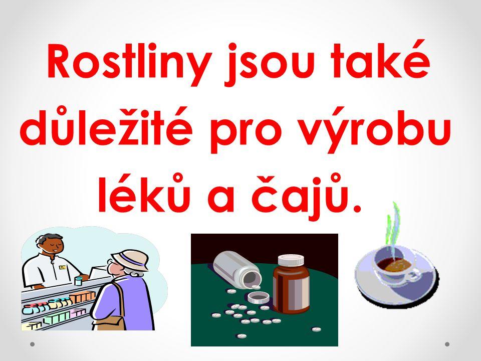 Rostliny jsou také důležité pro výrobu léků a čajů.