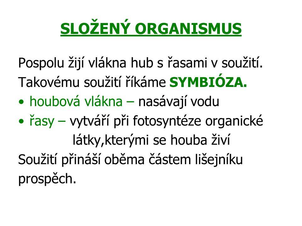 SLOŽENÝ ORGANISMUS Pospolu žijí vlákna hub s řasami v soužití.