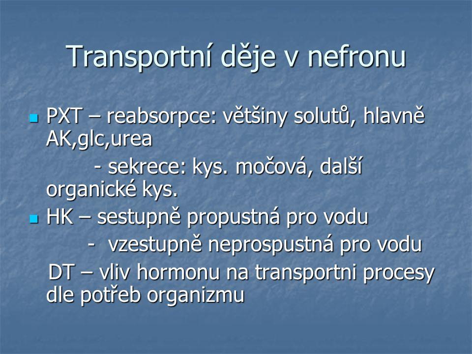 Transportní děje v nefronu PXT – reabsorpce: většiny solutů, hlavně AK,glc,urea PXT – reabsorpce: většiny solutů, hlavně AK,glc,urea - sekrece: kys. m