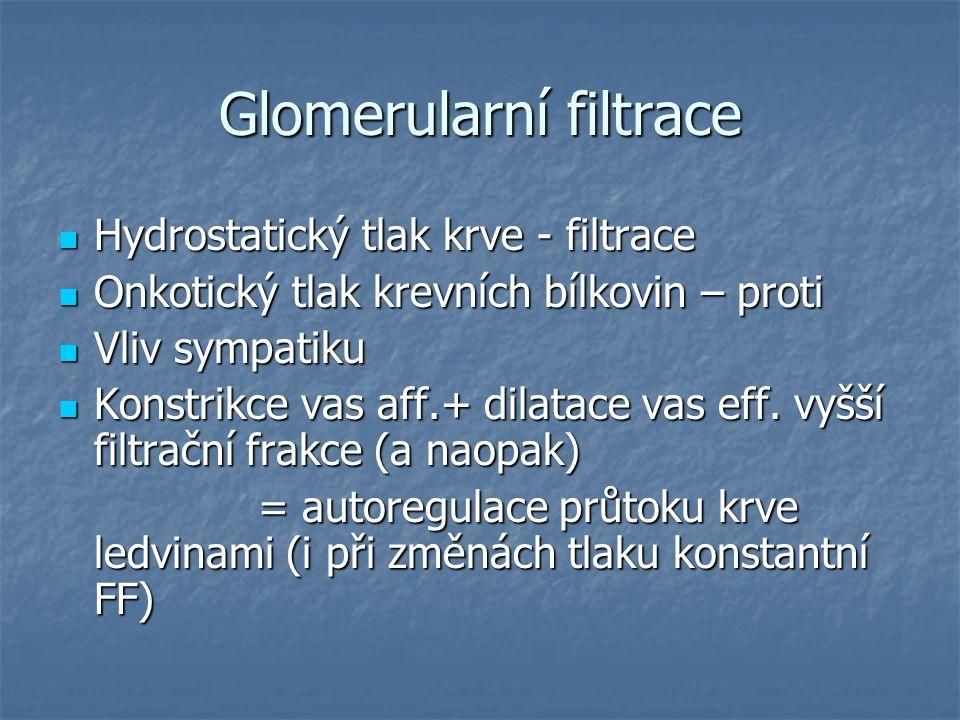 Glomerularní filtrace Hydrostatický tlak krve - filtrace Hydrostatický tlak krve - filtrace Onkotický tlak krevních bílkovin – proti Onkotický tlak kr