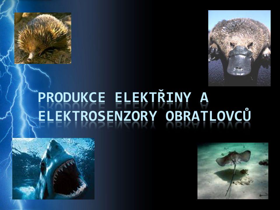Elektrorecepce (elektrocepce) schopnost vnímat elektrické impulzy vodní živočich ové – voda je lepším vodičem elektrického proudu než vzduch (vysoký obsah iontů) všichni strunatci mohli vnímat elektřinu, během evoluce však tuto schopnost ztratili - elektrolokac e (detekc e objektů na základě jejich různého elektrického odporu a vodivosti) - vnitrodruhov á komunikac e (elektrokomunikac e modulací elektrických vln) - obranné a útočné chování (omráčení kořisti, odehnání predátora)