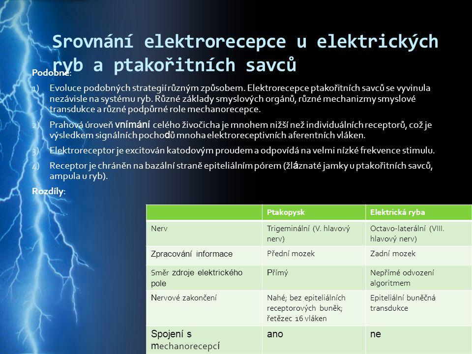 Srovnání elektrorecepce u elektrických ryb a ptakořitních savců Podobné: 1) Evoluce podobných strategií různým způsobem. Elektrorecepce ptakořitních s