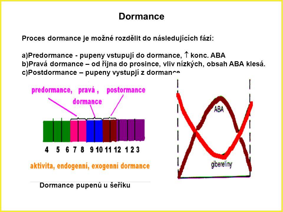 Dormance Proces dormance je možné rozdělit do následujících fází: a)Predormance - pupeny vstupují do dormance,  konc.