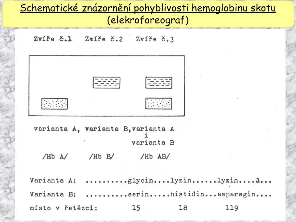 Schematické znázornění pohyblivosti hemoglobinu skotu (elekroforeograf)
