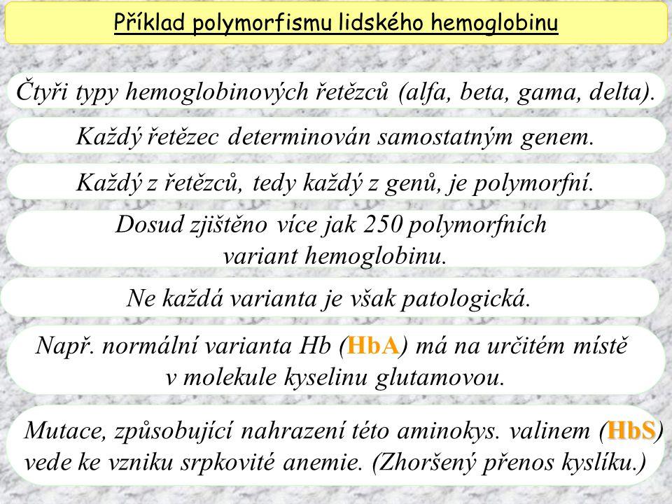 Čtyři typy hemoglobinových řetězců (alfa, beta, gama, delta). Příklad polymorfismu lidského hemoglobinu Každý řetězec determinován samostatným genem.