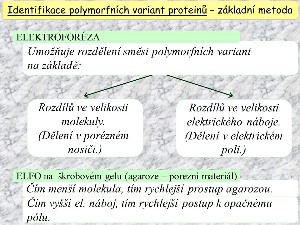 Identifikace polymorfních variant proteinů – základní metoda Umožňuje rozdělení směsi polymorfních variant na základě: Rozdílů ve velikosti molekuly.