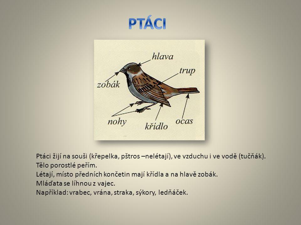 Ptáci žijí na souši (křepelka, pštros –nelétají), ve vzduchu i ve vodě (tučňák). Tělo porostlé peřím. Létají, místo předních končetin mají křídla a na