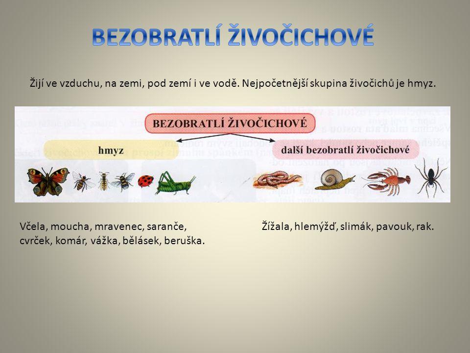 Včela, moucha, mravenec, saranče, cvrček, komár, vážka, bělásek, beruška. Žijí ve vzduchu, na zemi, pod zemí i ve vodě. Nejpočetnější skupina živočich