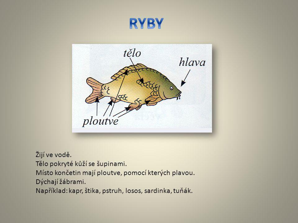 Žijí ve vodě. Tělo pokryté kůží se šupinami. Místo končetin mají ploutve, pomocí kterých plavou. Dýchají žábrami. Například: kapr, štika, pstruh, loso