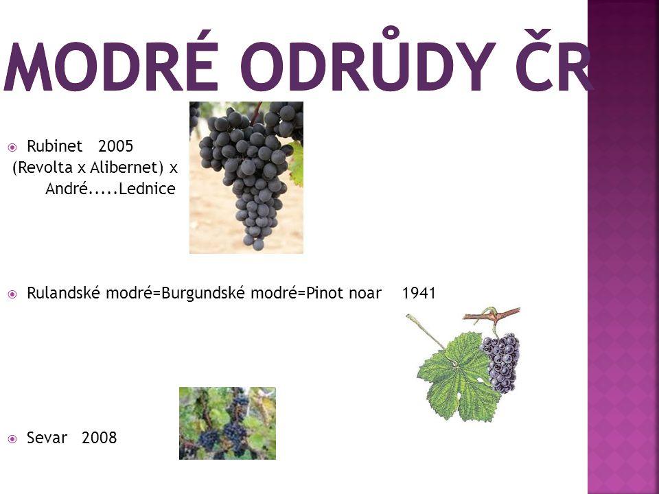  Rubinet 2005 (Revolta x Alibernet) x André.....Lednice  Rulandské modré=Burgundské modré=Pinot noar 1941  Sevar 2008