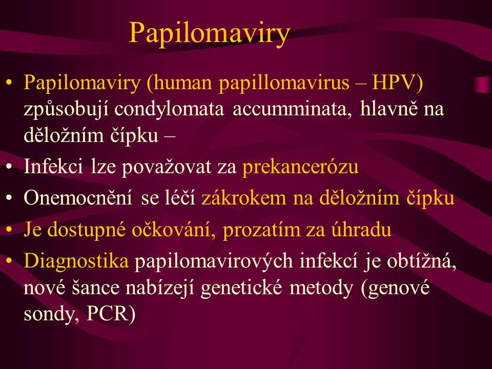 Papilomaviry Papilomaviry (human papillomavirus – HPV) způsobují condylomata accumminata, hlavně na děložním čípku – Infekci lze považovat za prekance