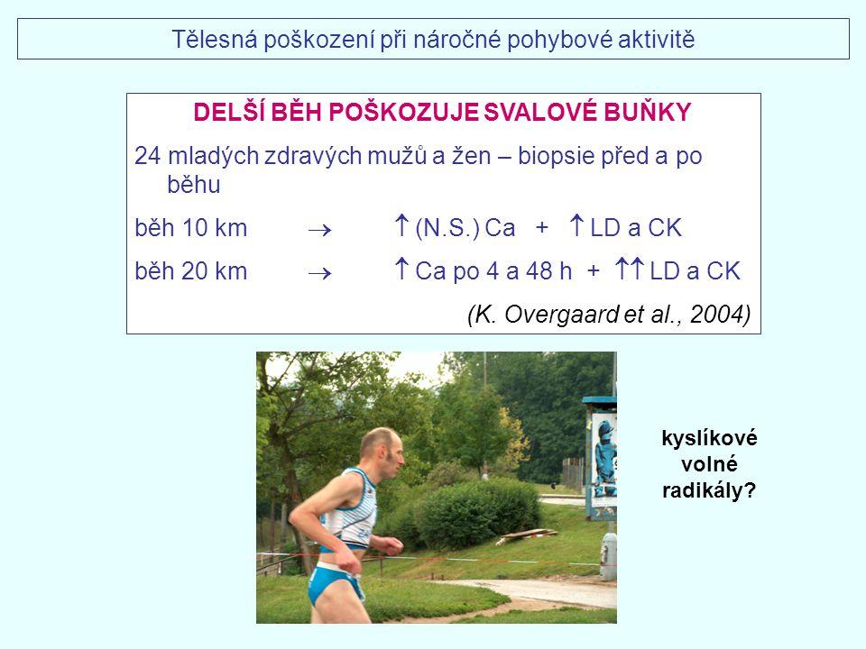 DELŠÍ BĚH POŠKOZUJE SVALOVÉ BUŇKY 24 mladých zdravých mužů a žen – biopsie před a po běhu běh 10 km  (N.S.) Ca +  LD a CK běh 20 km  Ca po 4 a 48
