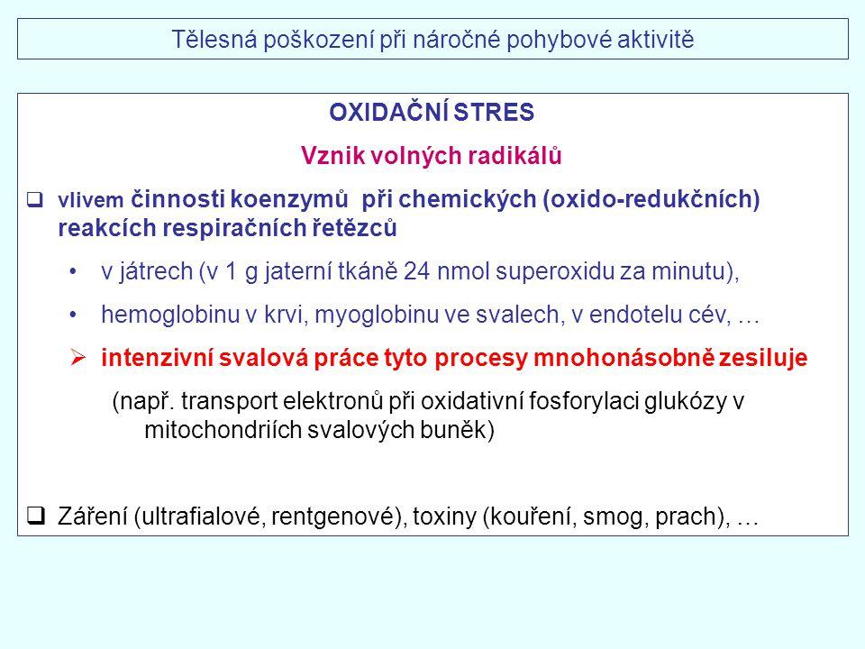 Tělesná poškození při náročné pohybové aktivitě OXIDAČNÍ STRES Vznik volných radikálů  vlivem činnosti koenzymů při chemických (oxido-redukčních) rea