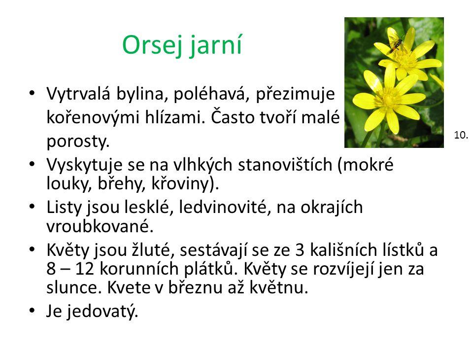 Orsej jarní Vytrvalá bylina, poléhavá, přezimuje kořenovými hlízami. Často tvoří malé porosty. Vyskytuje se na vlhkých stanovištích (mokré louky, břeh